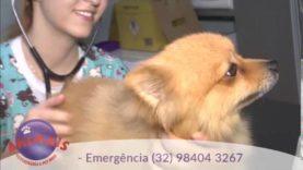 Animais Veterinária e Pet Shop