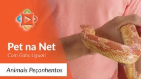 Pet na net – Animais Peçonhentos