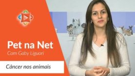 Pet Na NET  com Gaby Liguori – Câncer